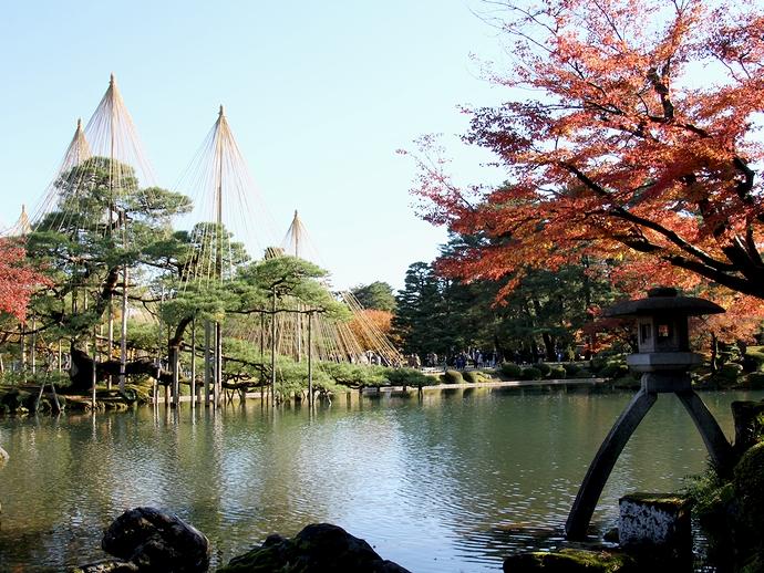 ことじ灯籠と松の木の雪吊り 金沢・兼六園