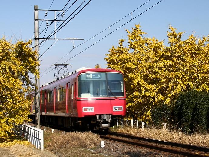 黄色いイチョウと名鉄電車