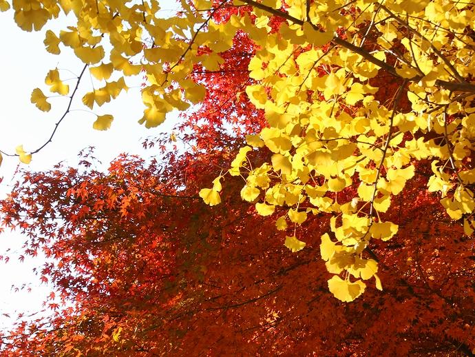 祐専寺の黄葉と紅葉