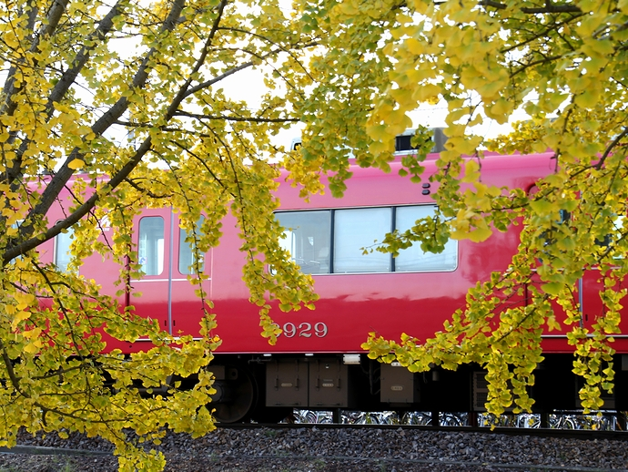 黄色いイチョウと名鉄電車 祖父江・山崎駅にて