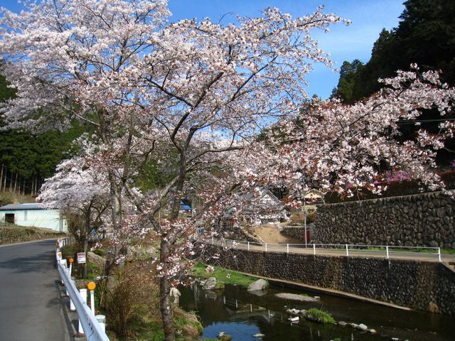2011.4.16養沢 (13)