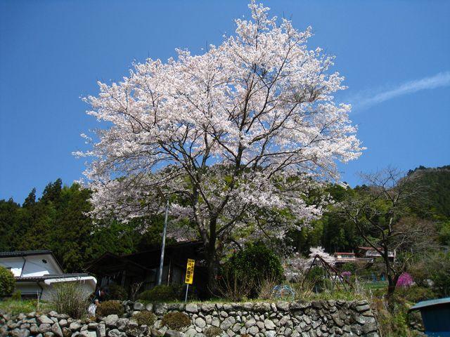 2011.4.16養沢 (42)