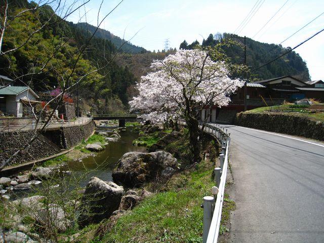 2011.4.16養沢 (43)