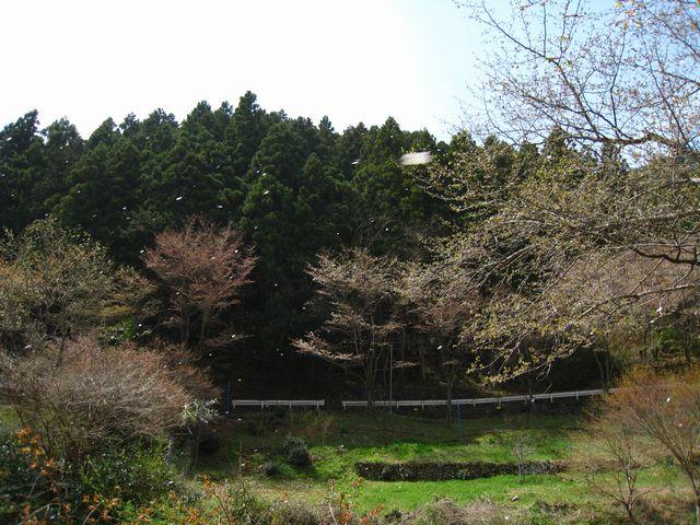 2011.4.16養沢 (49)