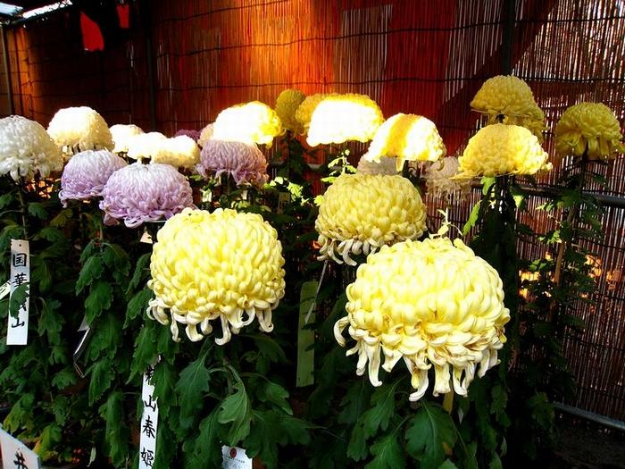 2011.11.23川越散策 (22)