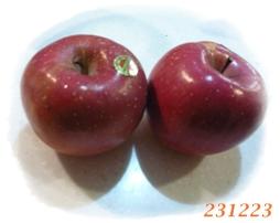 231223おやつ・りんご