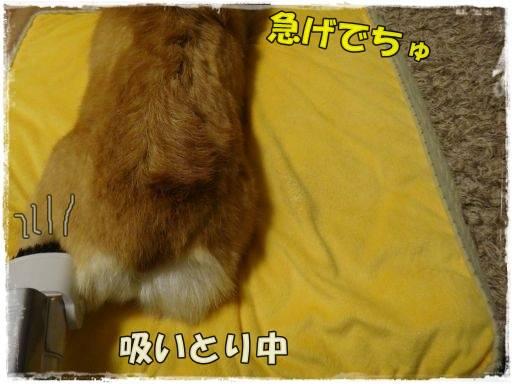 20120414-11.jpg