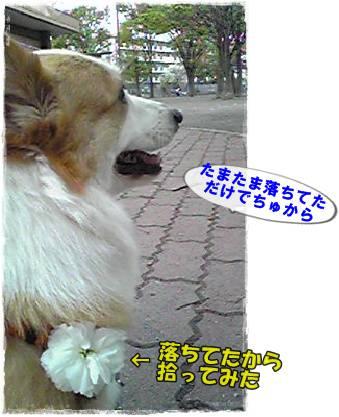 20120414-5.jpg