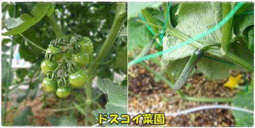 20120624-10.jpg