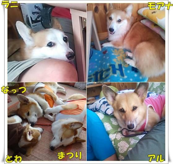 20120901-50.jpg