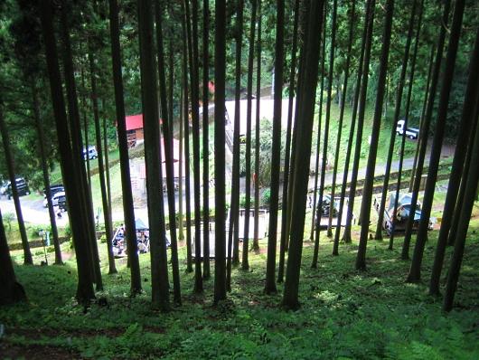 林ごしにキャンプエリアが見えます