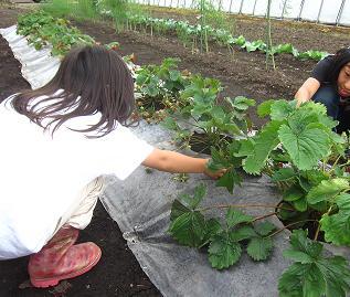野菜収穫2012