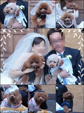 ふぅママ結婚式cats