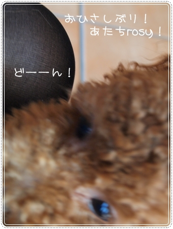 2012 01 22_4390