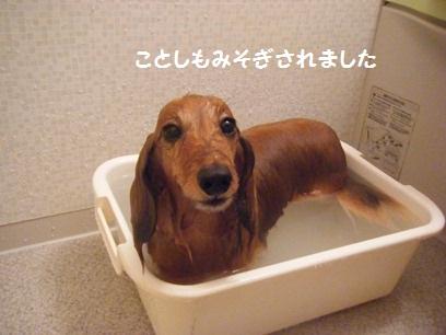 部屋の大掃除より桃のお風呂の方が丁寧だったような・・・。