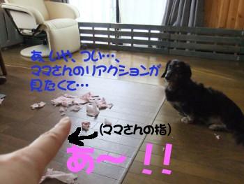 写真507(№186用)1
