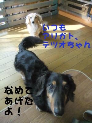 写真514(№187用)1