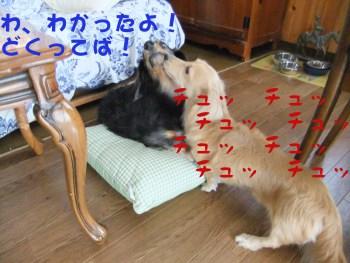 写真555(№191用)1