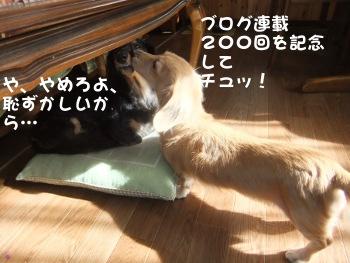 写真616(№200用)1