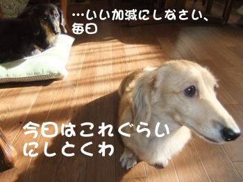 写真618(№200用)1