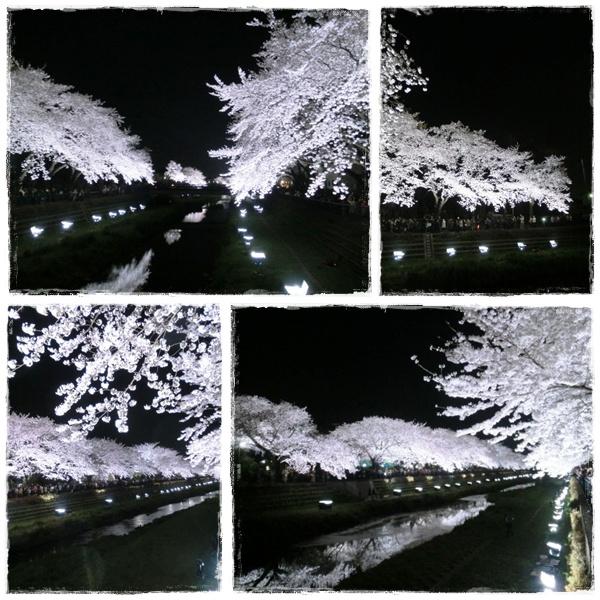 yozakura2.jpg