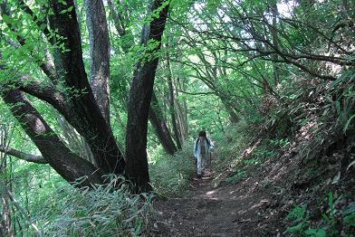 葛城山・自然研究路
