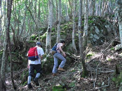 広葉樹林を登る