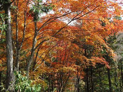 3 林道の紅葉