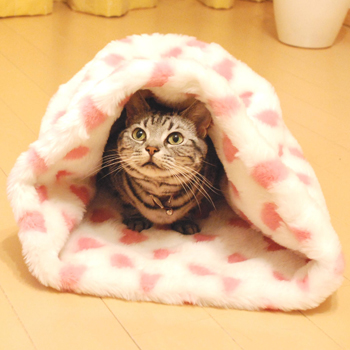 猫用オーバルベッド