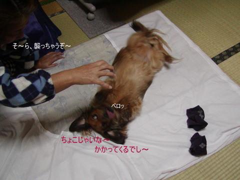 002_20101117222246.jpg