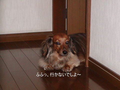 005_20101027214635.jpg