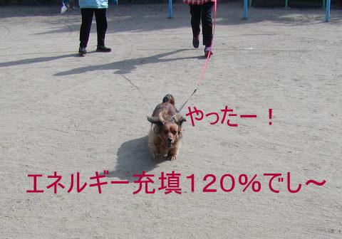013_20110206220529.jpg