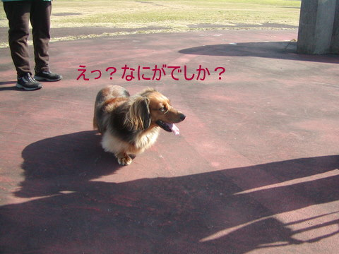015_20101205180902.jpg