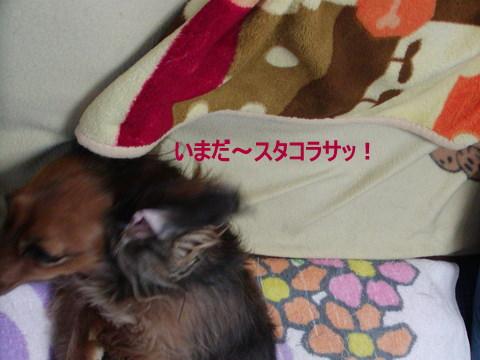 017_20101009223119.jpg