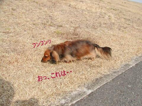 022_20110109165058.jpg