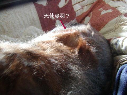 024_20101212171946.jpg
