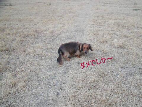 028_20110110145334.jpg