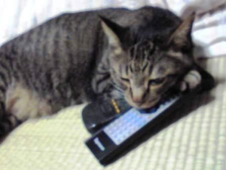 テレビ見るなんて、ゆるしませんのこと