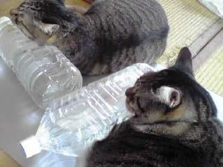 ペットボトルは猫除けにはなりません(´Д`)