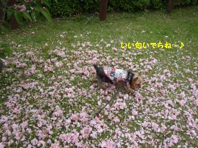 20120518001046.jpg