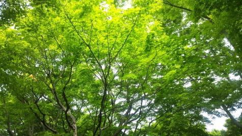 池田山公園-1