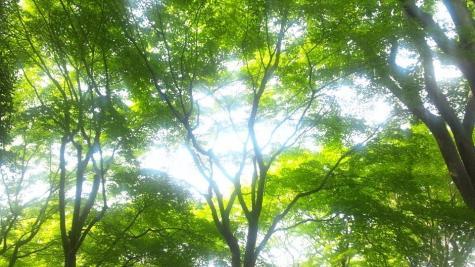 池田山公園-13