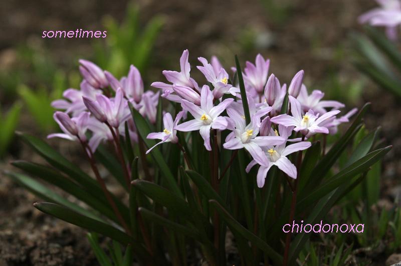 2011_0419c 022a-80a