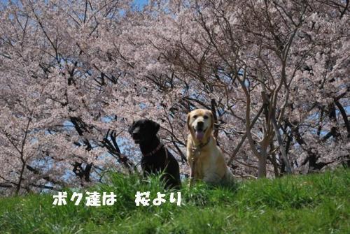 DSC_0084_20110412211415.jpg