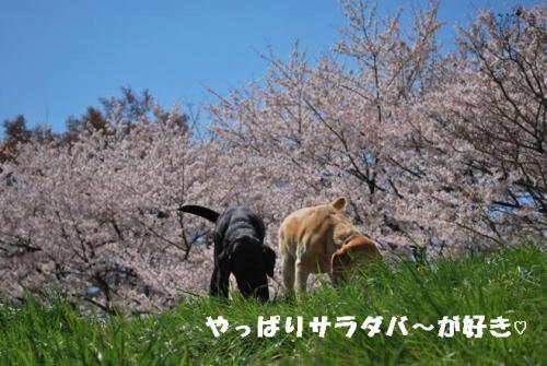 DSC_0086_20110412211414.jpg