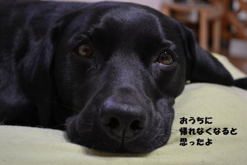 DSC_0717201145hamiy.jpg
