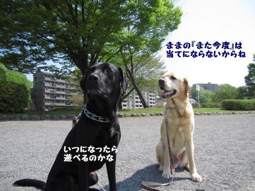 IMG_3115.jpg