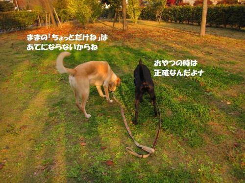 IMG_418020111114.jpg