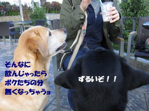 IMG_4297.jpg