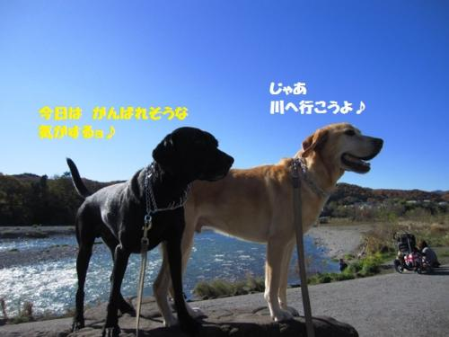 IMG_4351_20111205000640.jpg